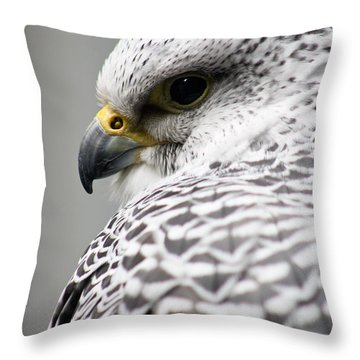 Falcon Throw Pillow by Mindee Green