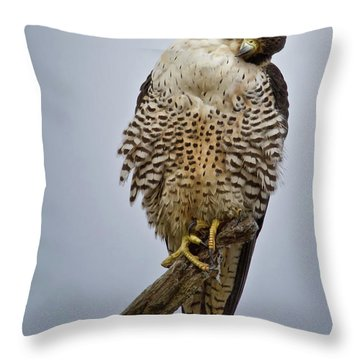 Falcon With Cocked Head Throw Pillow