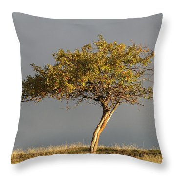 Fall At The Crabapple Tree Throw Pillow
