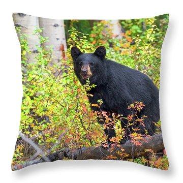 Fall Bear Throw Pillow by Scott Warner