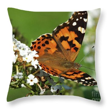 Fall Beauty - Painted Lady Throw Pillow