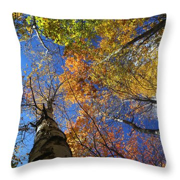 Fall Canopy Patterns 6 Throw Pillow