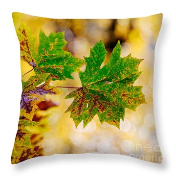 Fall Changes Everything Throw Pillow by MaryJane Armstrong