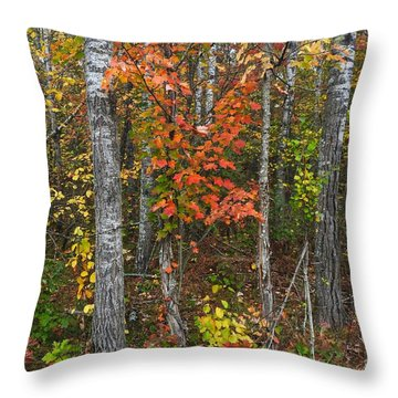 Fall Color At Gladwin 4543 Throw Pillow