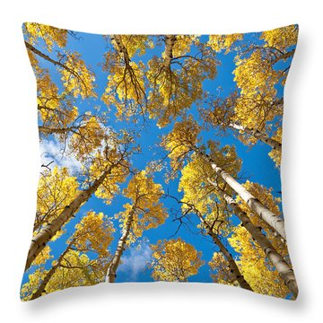 Fall Colored Aspens In The Inner Basin Throw Pillow