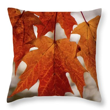 Fall Foliage Throw Pillow by Kimberly Mackowski