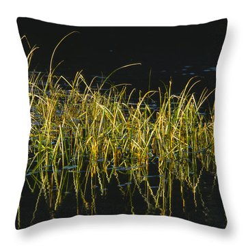 Fall Grasses - Snake River Throw Pillow by Sandra Bronstein