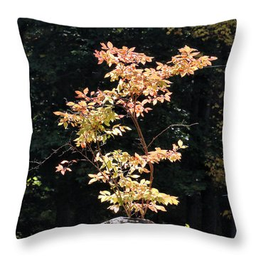 Throw Pillow featuring the photograph Fall Illumination by William Selander