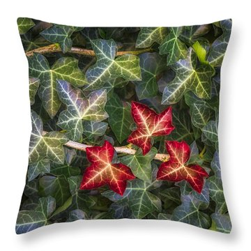 Throw Pillow featuring the photograph Fall Ivy Leaves by Adam Romanowicz