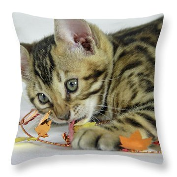 Fall Kitten Throw Pillow by Shoal Hollingsworth
