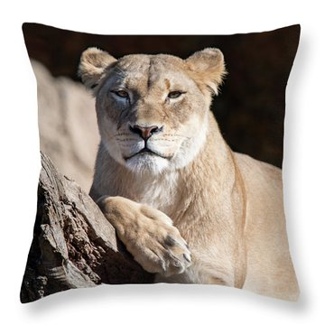 Fall Lioness Throw Pillow