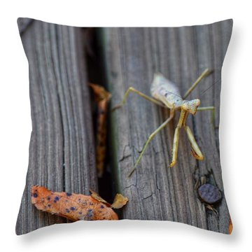 Fall Mantis  Throw Pillow