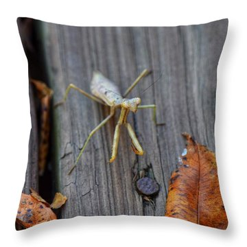Fall Mantis  Throw Pillow