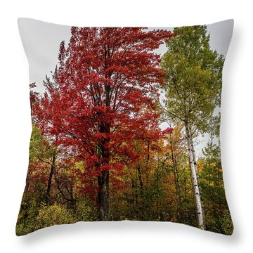 Throw Pillow featuring the photograph Fall Maple by Paul Freidlund
