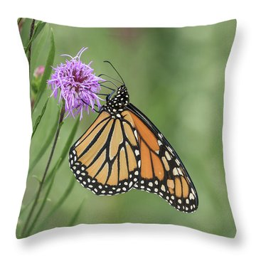 Fall Monarch 2016-2 Throw Pillow