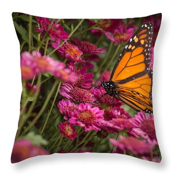 Throw Pillow featuring the photograph Fall Monarch  by Julie Andel