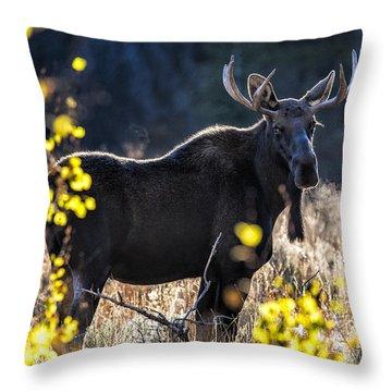 Fall Moose Throw Pillow