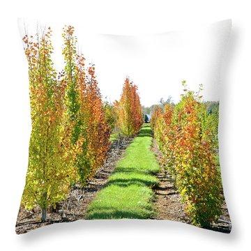 Fall On The Tree Farm Throw Pillow