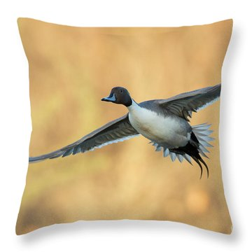 Fall Pintail Throw Pillow