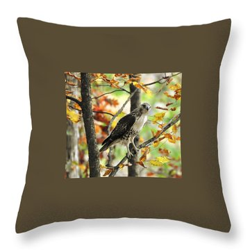 Fall Red-tailed Hawk Throw Pillow