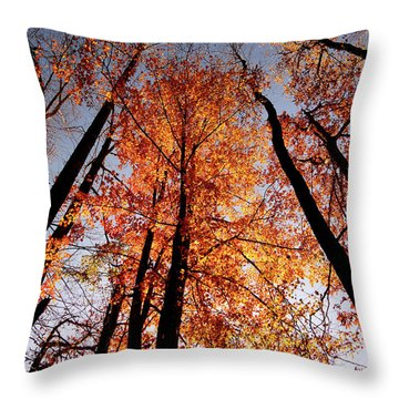 Throw Pillow featuring the photograph Fall Trees Sky by Meta Gatschenberger