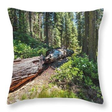 Fallen Tree- Throw Pillow