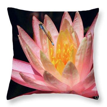 Familiar Bluet Damselfly And Lotus 2 Throw Pillow