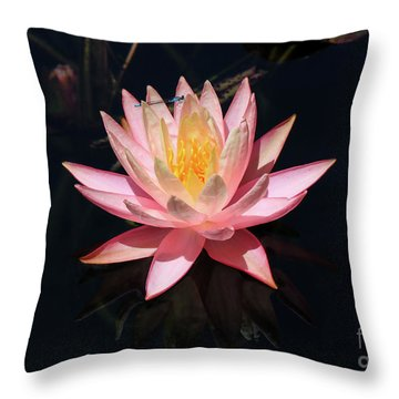 Familiar Bluet Damselfly And Lotus  Throw Pillow