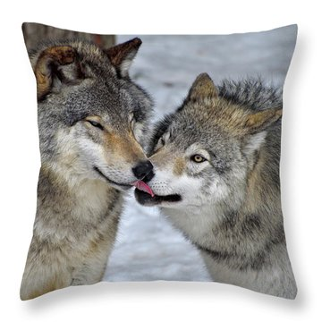 Throw Pillow featuring the photograph Familiar by Tony Beck