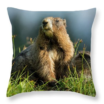 Marmot Home Decor