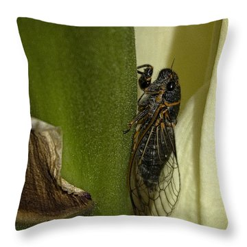 Fancy Meeting You Here Throw Pillow