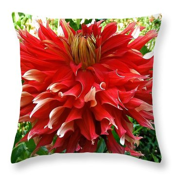 Fancy Red Dahlia Throw Pillow
