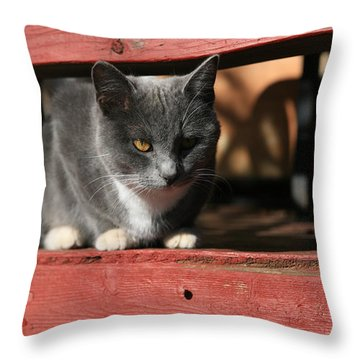 Porch Throw Pillows