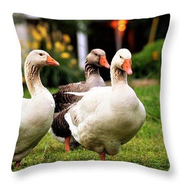 Farm Geese Throw Pillow