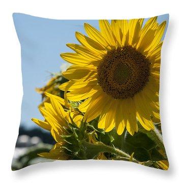 Farm Sunshine Throw Pillow