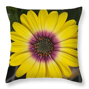 Fascinating Yellow Flower Throw Pillow by Jasna Gopic