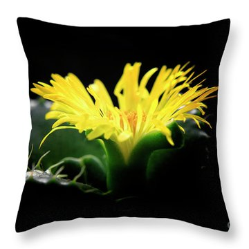 Faucaria Tigerina Tiger's Jaw Throw Pillow by Charline Xia