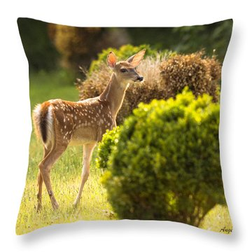 Throw Pillow featuring the photograph Fawn by Angel Cher