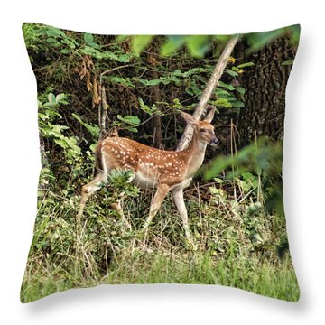 Fawn In The Woods Throw Pillow