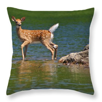 Fawn In Water Throw Pillow