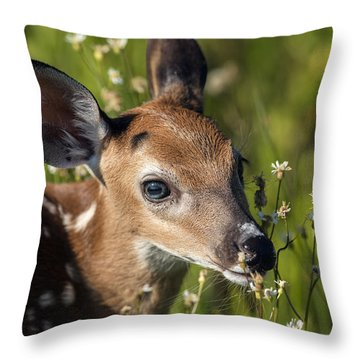 Fawn In Wildflowers Throw Pillow