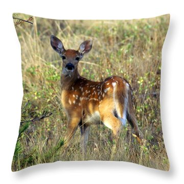 Fawn Throw Pillow by Marty Koch