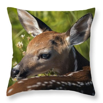 Fawn Over The Shoulder Throw Pillow