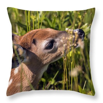 Fawn Smelling The Wildflowers Throw Pillow