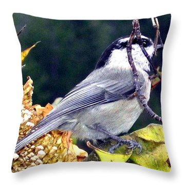 Feast For A Chickadee Throw Pillow by Will Borden