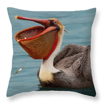 Throw Pillow featuring the photograph Feasting Brown Pelican  by Ram Vasudev