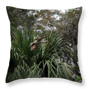 Feather 8-10 Throw Pillow by Skip Willits