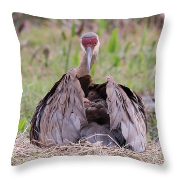 Feather Bed Throw Pillow by Jim Gray