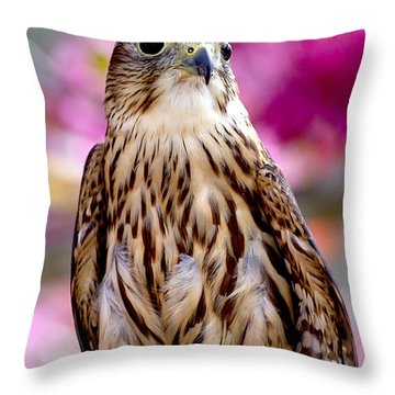 Feathered Wizard Throw Pillow