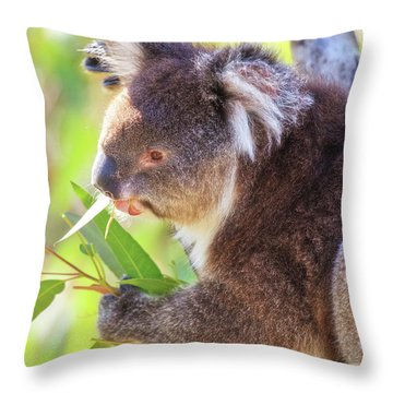 Feed Me, Yanchep National Park Throw Pillow by Dave Catley